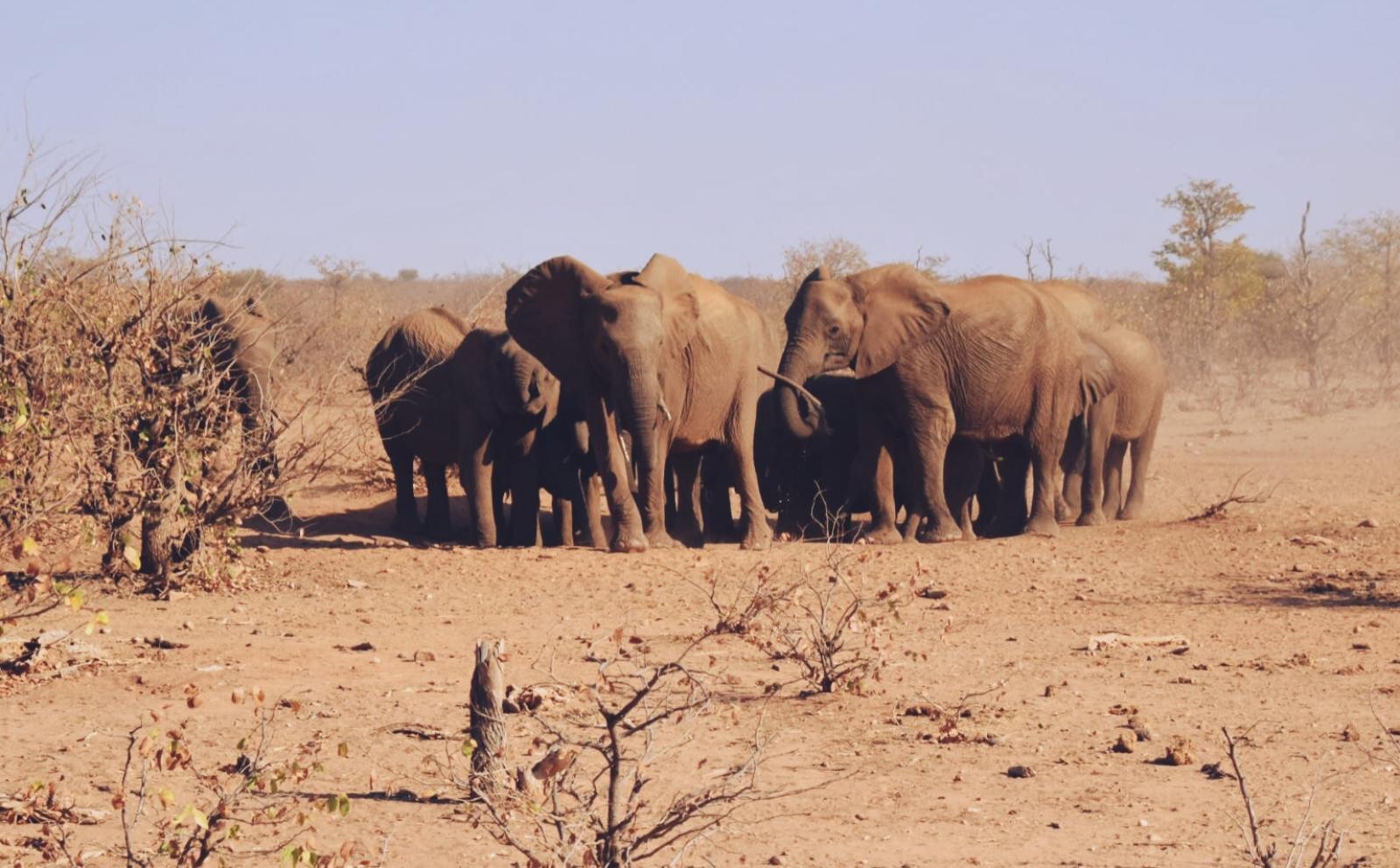 ボツワナで環境保護ボランティア松澤晃汰さんが見たゾウの群れ